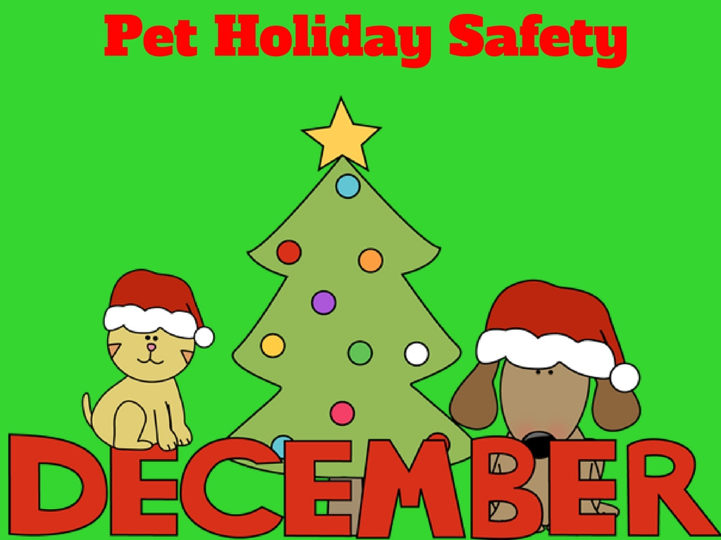 Im Sure Many Of You Are Decorating And Getting Ready For The Holidays I Would Like To Remind Dangers Our Pets During