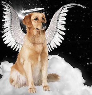 Dog Angel Dealing with Death of a Pet