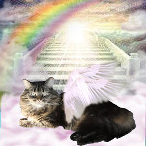 Cat Angel Dealing with Death of a Pet